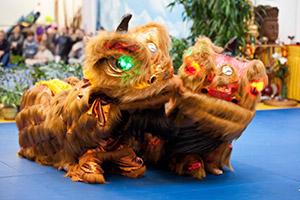 Традиционный Китайский театр Льва и Дракона