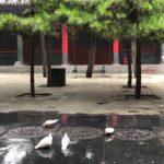 Шаолинь 2018 Live поиск правды