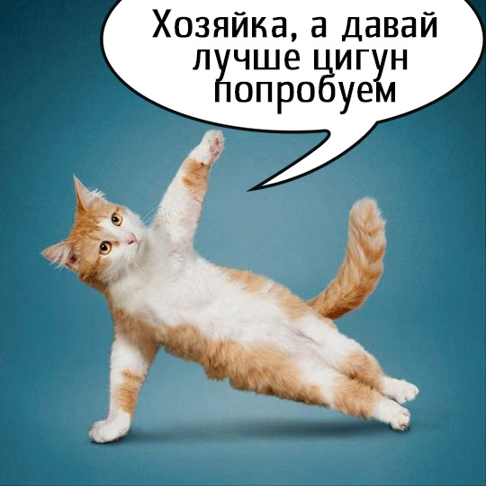 цигун кот