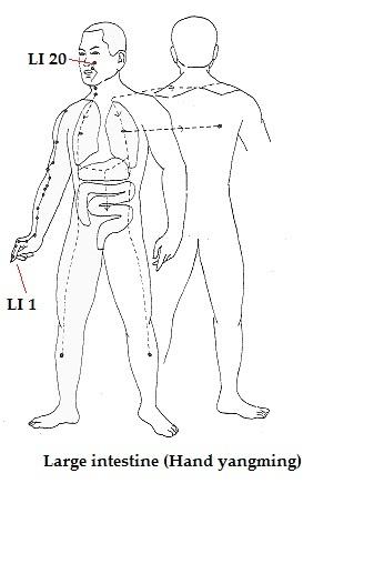 меридиан толстой кишки